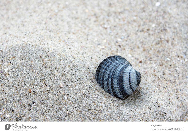 sand mussel Healthy Alternative medicine Wellness Harmonious Well-being Senses Vacation & Travel Summer Summer vacation Beach Ocean Island Beach bar Nature