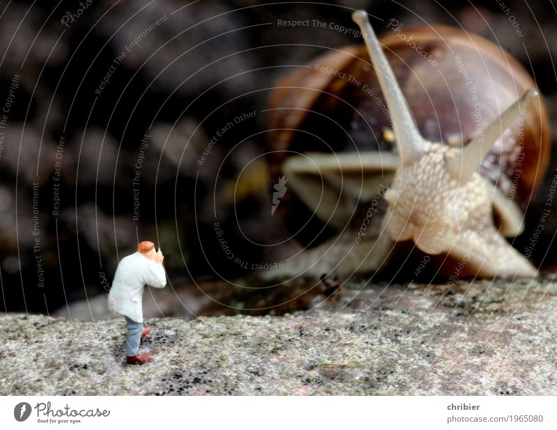 Please be kind! Photography Photographer Safari Garden Animal Snail 1 Discover Subdued colour Exterior shot Day Animal portrait