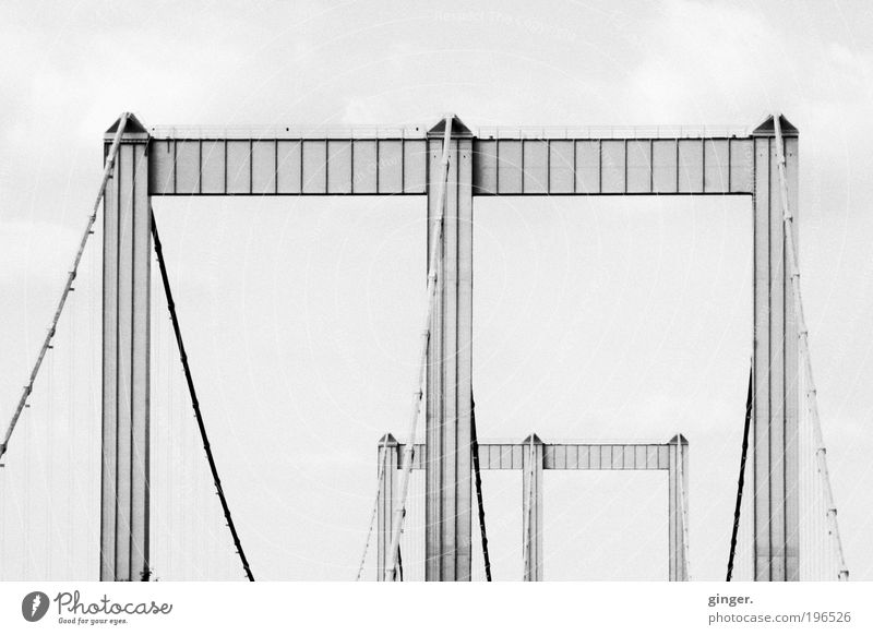 Beautiful Architecture Tall Concrete Large Esthetic Bridge Manmade structures Long Steel cable Highway Footpath Traffic infrastructure Cologne Black & white photo Motoring