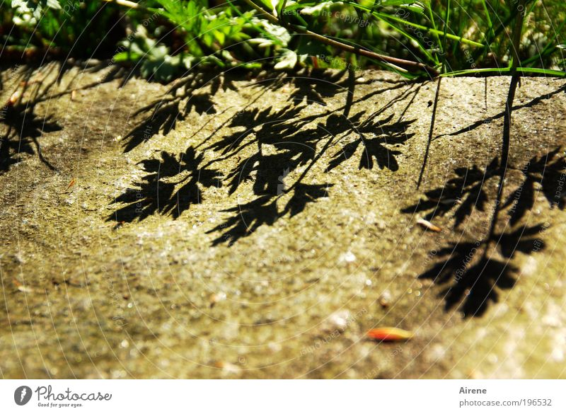plaster shadow Nature Spring Beautiful weather Plant Grass Foliage plant Meadow Growth Terrace Silhouette Stone Shadow Natural Positive Brown Green Black