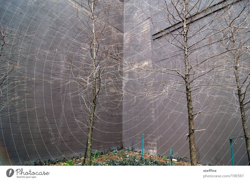 Nature Tree Plant Stone Facade Concrete High-rise Branch Bleak Branchage Building Concrete wall