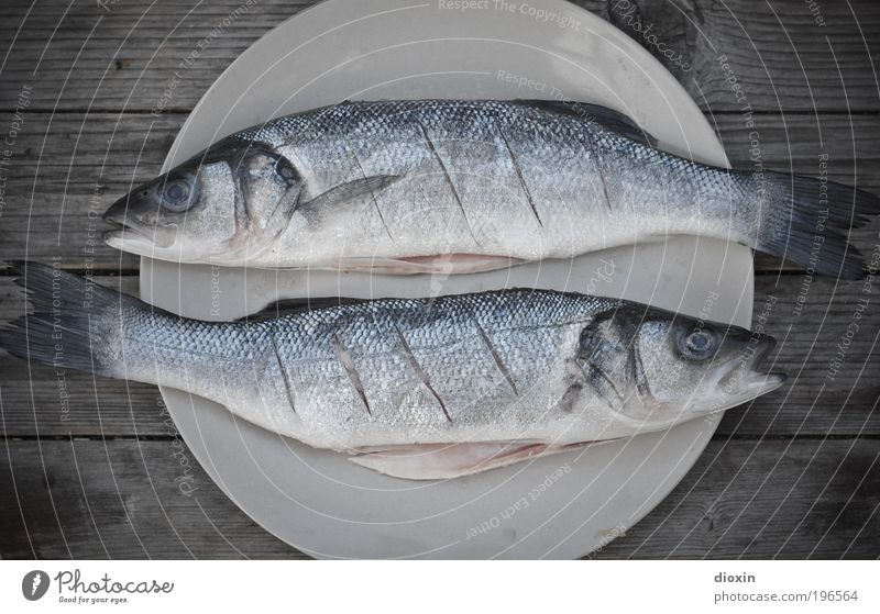 Nature Blue White Animal Cold Death Gray Food Lie Leisure and hobbies Wild animal Pair of animals Nutrition Sign Fish