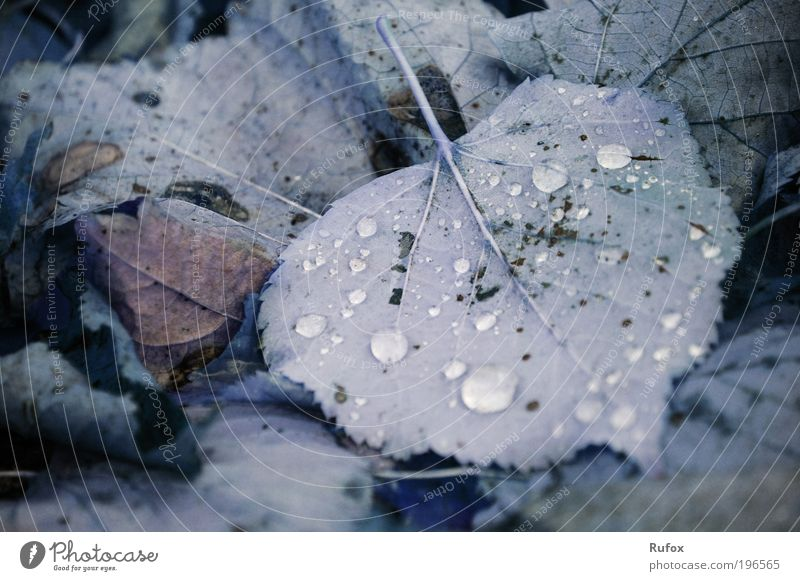 This world is very tricky ... Nature Earth Autumn Plant Grass Leaf Park Meadow Old Dirty Drop Drops of water Deciduous forest Ground Colour photo Exterior shot
