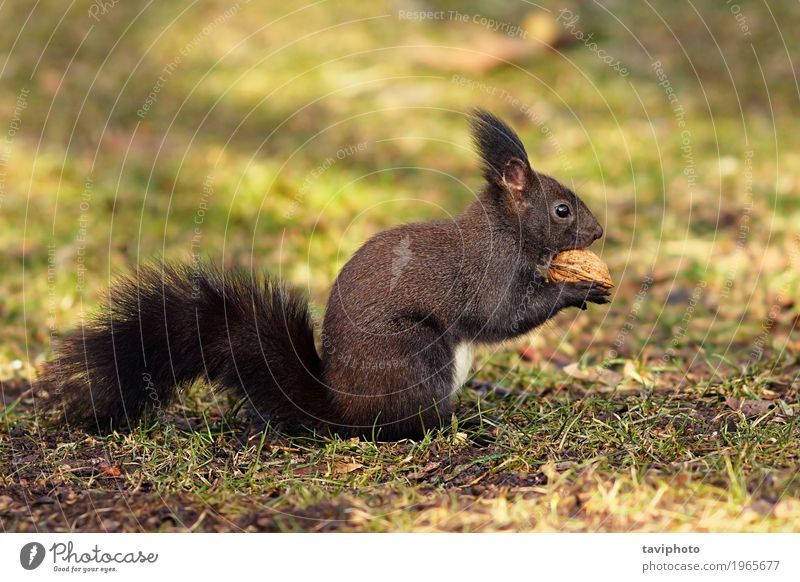 cute squirrel from the park Eating Beautiful Garden Environment Nature Animal Autumn Park Forest Fur coat Small Funny Natural Cute Wild Brown Gray Green Red