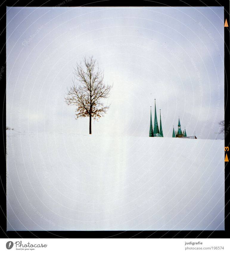 Erfurt Environment Nature Landscape Climate Snow Tree Park Hill Town Deserted Church Dome Building Architecture Roof Tourist Attraction Growth Loneliness