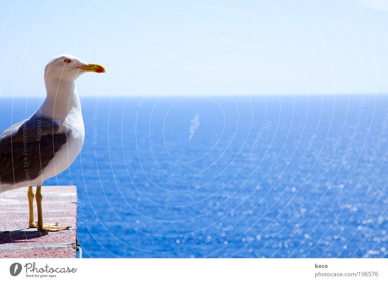 Nature Sky White Sun Ocean Blue Summer Vacation & Travel Black Animal Yellow Far-off places Bird Stand Animal face Wing