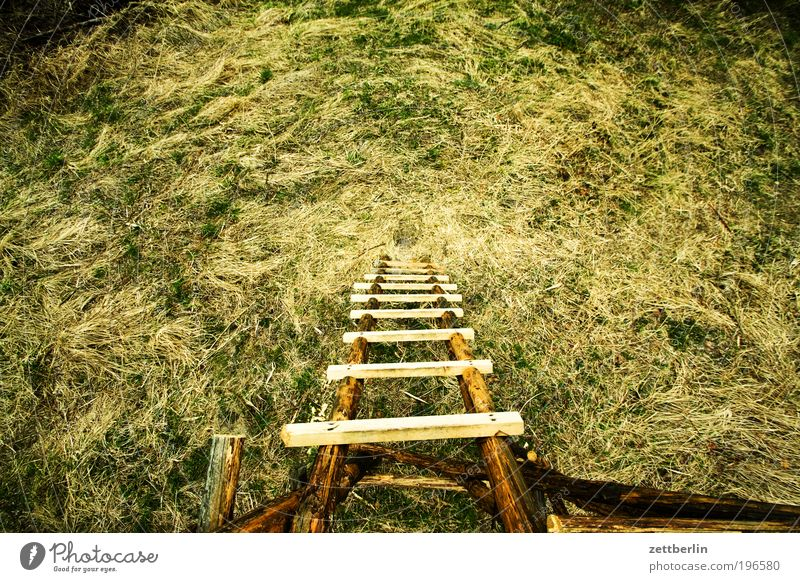 high stand Nature April Relaxation Garden Park Forest walk Decency Hunting Blind Hunter hunting stall Ladder Rung Tall Deep Go up Descent Grass Meadow Clearing