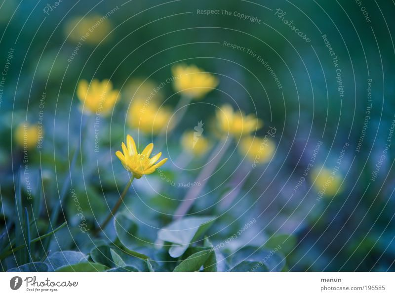 Nature Blue Green Relaxation Flower Leaf Calm Environment Yellow Meadow Spring Blossom Park Fresh Happiness Joie de vivre (Vitality)