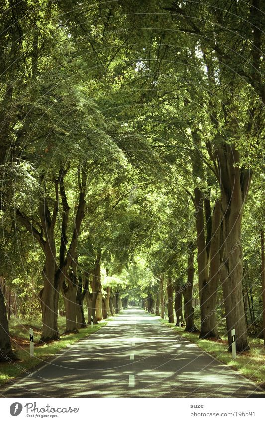 avenue, avenue Environment Nature Landscape Plant Elements Summer Climate Beautiful weather Tree Leaf Forest Transport Traffic infrastructure Street