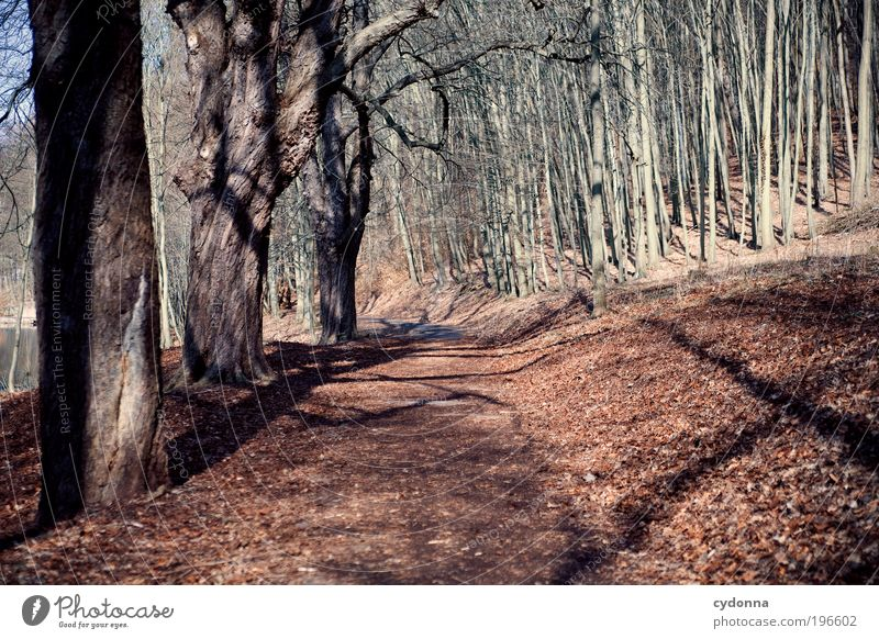 Nature Tree Leaf Calm Forest Far-off places Relaxation Environment Life Landscape Movement Lanes & trails Dream Time Leisure and hobbies Trip