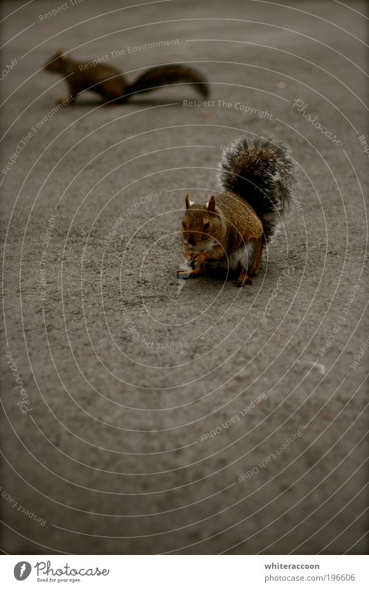 Nutrition Animal Gray Park Brown Wild animal To feed Copy Space left Rodent