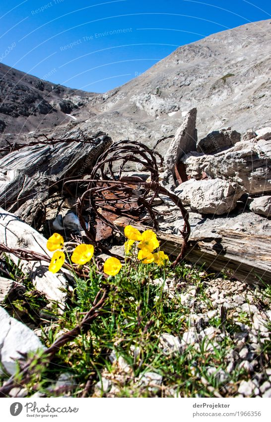War remains from 1914 with flowers Vacation & Travel Tourism Trip Adventure Far-off places Freedom Mountain Hiking Environment Nature Landscape Plant Animal