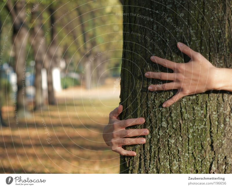 love of nature Life Hand Fingers 18 - 30 years Youth (Young adults) Adults Nature Beautiful weather Tree Park Touch To enjoy Dream Firm Together Near Natural