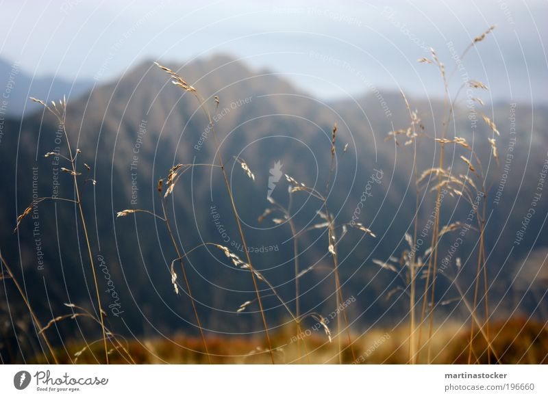 Mountain full of grass Environment Nature Landscape Sky Storm clouds Autumn Bad weather Grass Meadow Deserted Brown Loneliness Cold Blade of grass Colour photo