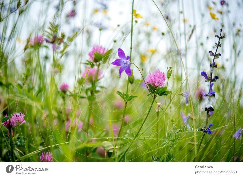 Nature Plant Summer Green Leaf Environment Blossom Meadow Moody Growth Fresh Esthetic Happiness Blossoming Alps Fragrance