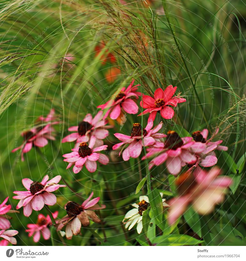 Nature Plant Summer Colour Green Beautiful Flower Red Blossom Grass Garden Pink Blossoming Picturesque Blossom leave Summery