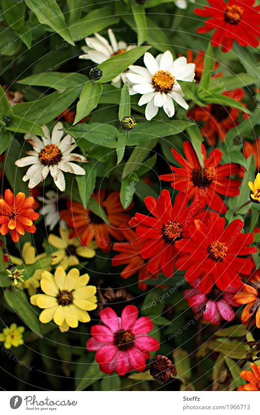Nature Plant Summer Colour Beautiful Green Flower Red Yellow Blossom Garden Park Esthetic Blossoming Blossom leave Summery