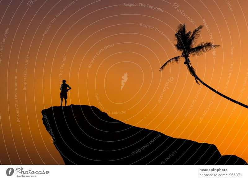 Silhouette of Man, Rock & Palm at Sunset Exotic Vacation & Travel Tourism Far-off places Freedom Summer Beach Ocean Masculine Adults 1 Human being Sky Tree