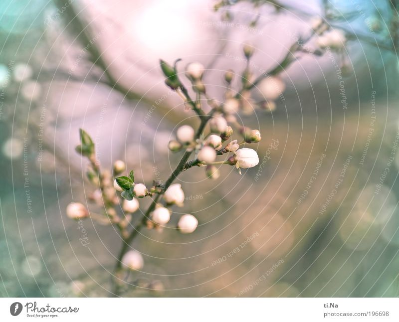 spring a little Environment Nature Landscape Animal Spring Beautiful weather Plant Tree Wild plant Plum tree Blossoming Fragrance Glittering Hang Illuminate
