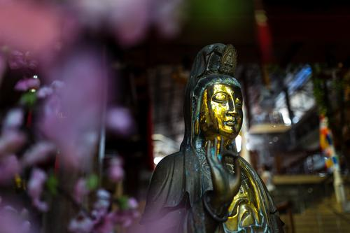 Golden Buddha Statue with Purple Flowers Bokeh Sculpture Colombo Sri Lanka Asia Contentment Self-confident Willpower Love Compassion Peaceful Goodness Altruism
