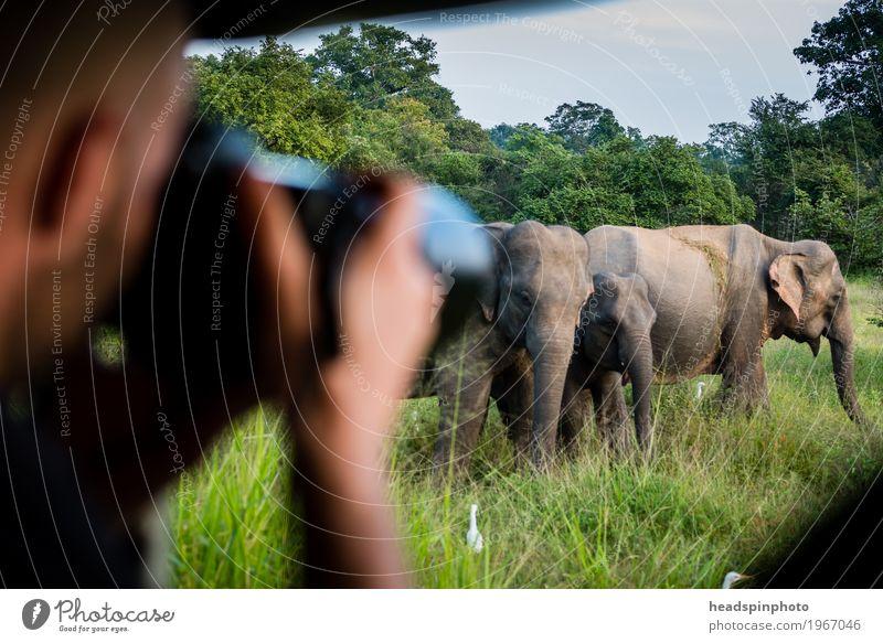 Photo Safari with Elegant Sri Lanka Vacation & Travel Tourism Trip Adventure Far-off places Masculine Head Hand 1 Human being Nature reserve Animal Elephant