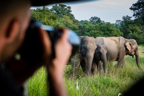 Photo Safari with Elegant Sri Lanka Vacation & Travel Tourism Trip Adventure Far-off places Masculine Head Hand 1 Human being Nature reserve Animal Elephant