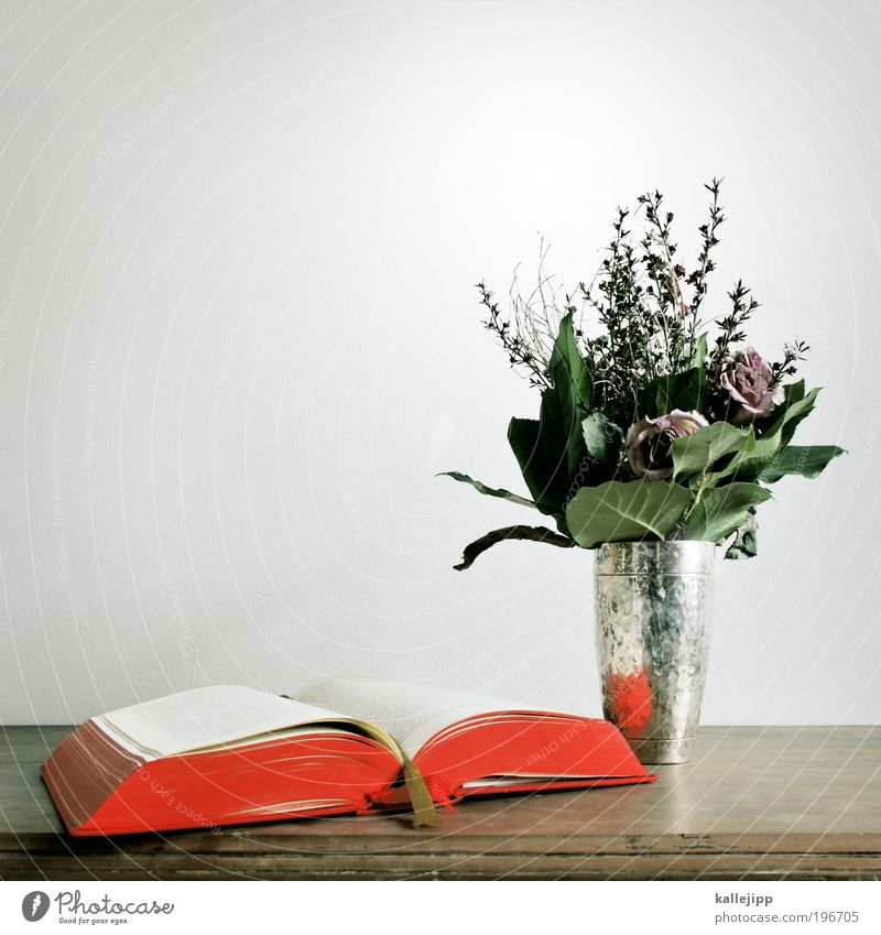 Red Leaf Wood Blossom Leisure and hobbies Book Elegant Paper Table Lifestyle Rose Culture Letters (alphabet) Education Decoration Bouquet