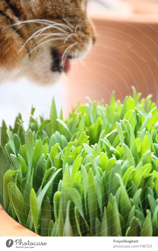 Cat Nature Green Animal Nutrition Grass Spring Brown Natural Free Exceptional Fresh Pelt Simple Trust Strong