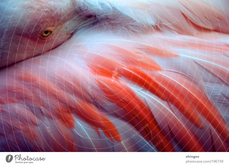 Beautiful White Animal Relaxation Warmth Contentment Bird Pink Elegant Sleep Safety Esthetic Near Soft Animal face Kitsch