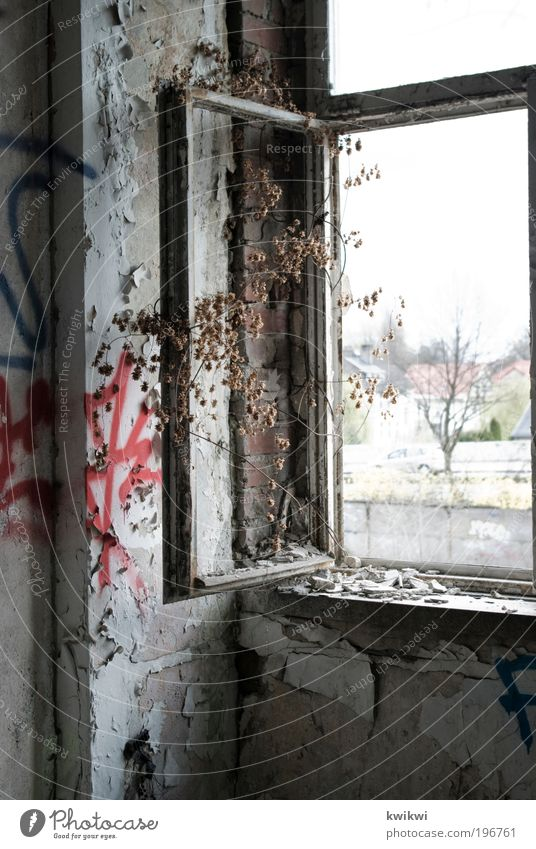tree Plant Tree Industrial plant Factory Ruin Wall (barrier) Wall (building) Facade Window Stone Concrete Glass Esthetic Loneliness Graffiti