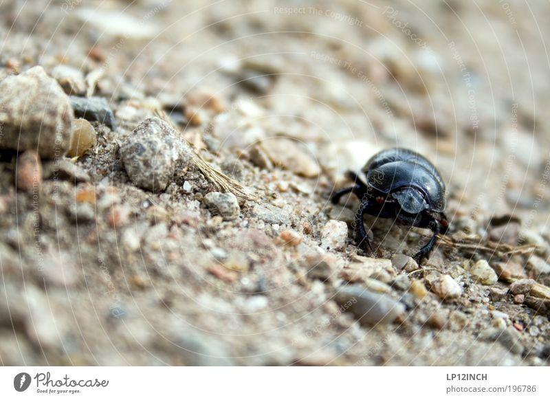 Nature Summer Animal Environment Movement Sand Park Earth Field Fear Walking Dangerous Observe Curiosity Fear of death Effort