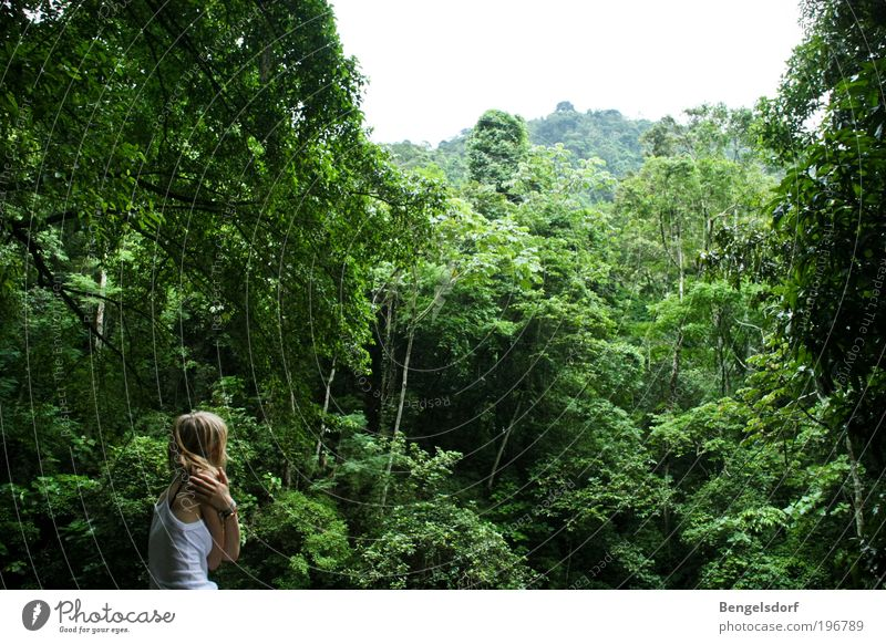 I love the sound of the jungle Harmonious Well-being Senses Relaxation Calm Meditation Vacation & Travel Tourism Adventure Far-off places Freedom Expedition