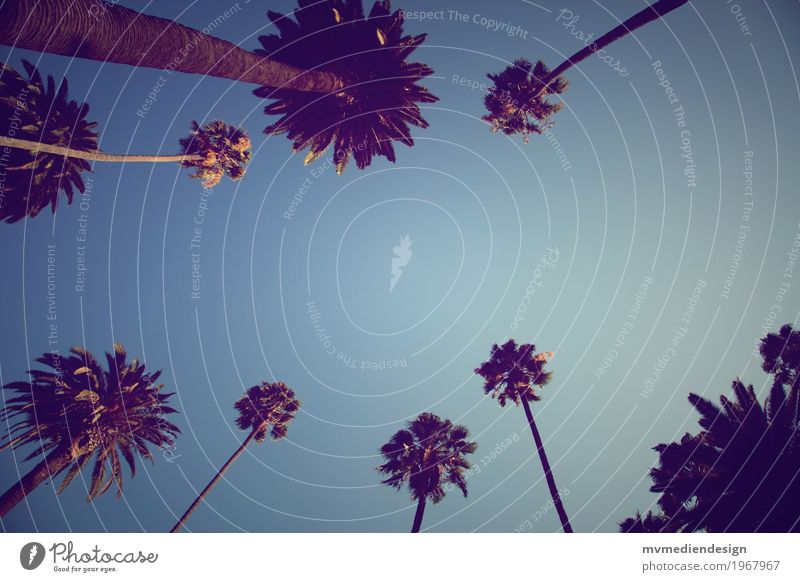 Sky Nature Joy Street Warmth Happy Contentment Joie de vivre (Vitality) Palm tree Hollywood Los Angeles Beverly Hills