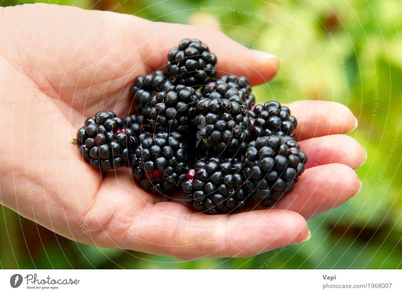 Stack of blackberry Food Fruit Dessert Organic produce Vegetarian diet Diet Summer Garden Hand Nature Fresh Delicious Natural Rich Juicy Wild Yellow Green Red
