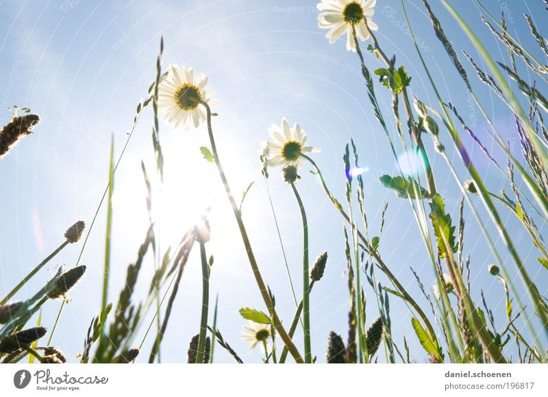 Solar Energy Part 3 Environment Nature Plant Cloudless sky Sun Sunlight Spring Summer Climate Weather Beautiful weather Grass Leaf Blossom Meadow Blue Green