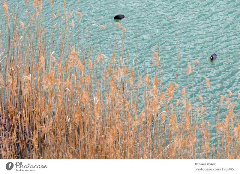 Nature Water Blue Summer Calm Animal Yellow Grass Spring Bird Trip Idyll Serene Wild animal Lakeside