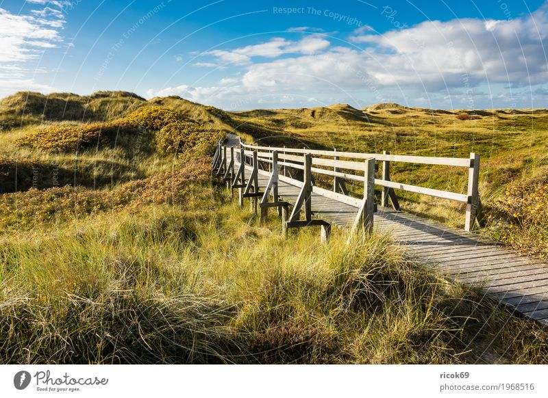 Landscape in the dunes on the island of Amrum Relaxation Vacation & Travel Tourism Island Nature Clouds Autumn Bushes Coast North Sea Bridge Lanes & trails Blue