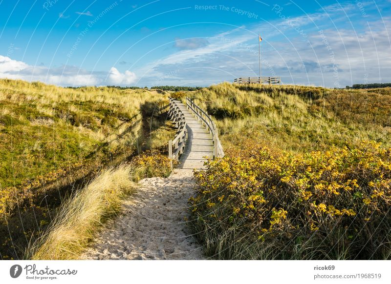 Landscape in the dunes on the island of Amrum Relaxation Vacation & Travel Tourism Island Nature Clouds Autumn Tree Bushes Coast North Sea Bridge Lanes & trails