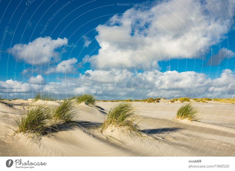 Landscape with dunes on the island of Amrum Relaxation Vacation & Travel Tourism Beach Ocean Island Nature Sand Clouds Autumn Coast North Sea Blue Yellow Dune
