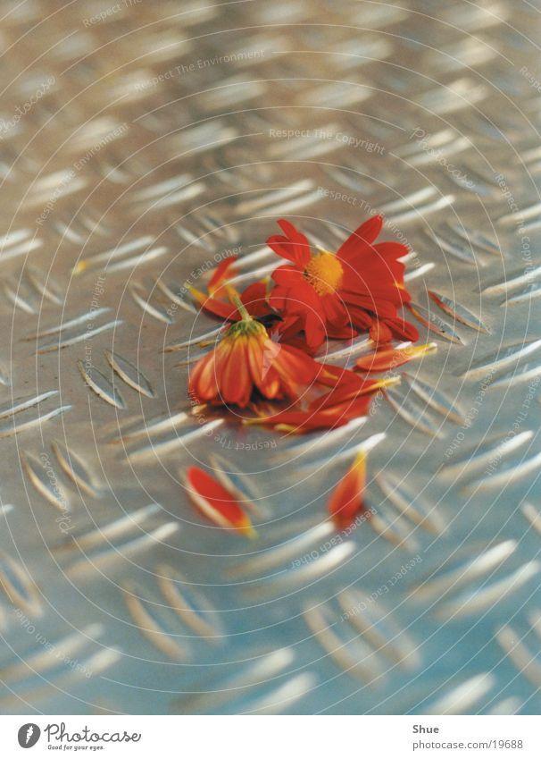 Broken Flower Destruction Leaf Metal Floor covering Orange