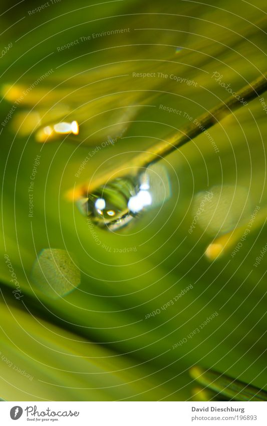 Nature Green Plant Wet Drops of water Round Sphere Damp Blade of grass Dew Harmonious Silver Foliage plant Water Greeny-yellow
