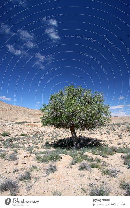 Poor, single tree without friends Environment Nature Landscape Plant Earth Sand Sky Beautiful weather Drought Tree Desert Blue Brown Green Growth Change