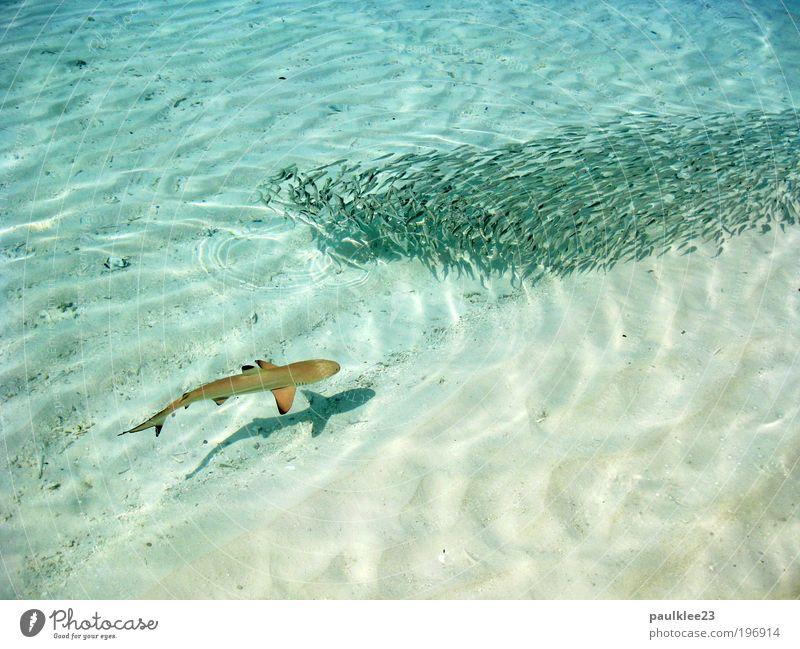 attention shark Contentment Relaxation Hunting Vacation & Travel Tourism Far-off places Sun Ocean Island Dive Landscape Climate Climate change Reef Coral reef