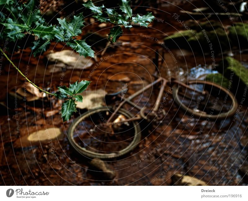 Nature Old Plant Water Landscape Leaf Environment Lanes & trails Natural Park Earth Bicycle Bushes Drops of water Broken To fall