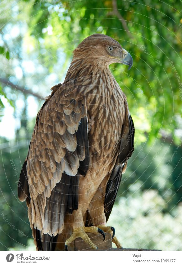 A hawk eagle Hunting Freedom Environment Nature Landscape Plant Animal Sky Spring Summer Beautiful weather Tree Park Forest Wild animal Bird 1 Flying Aggression