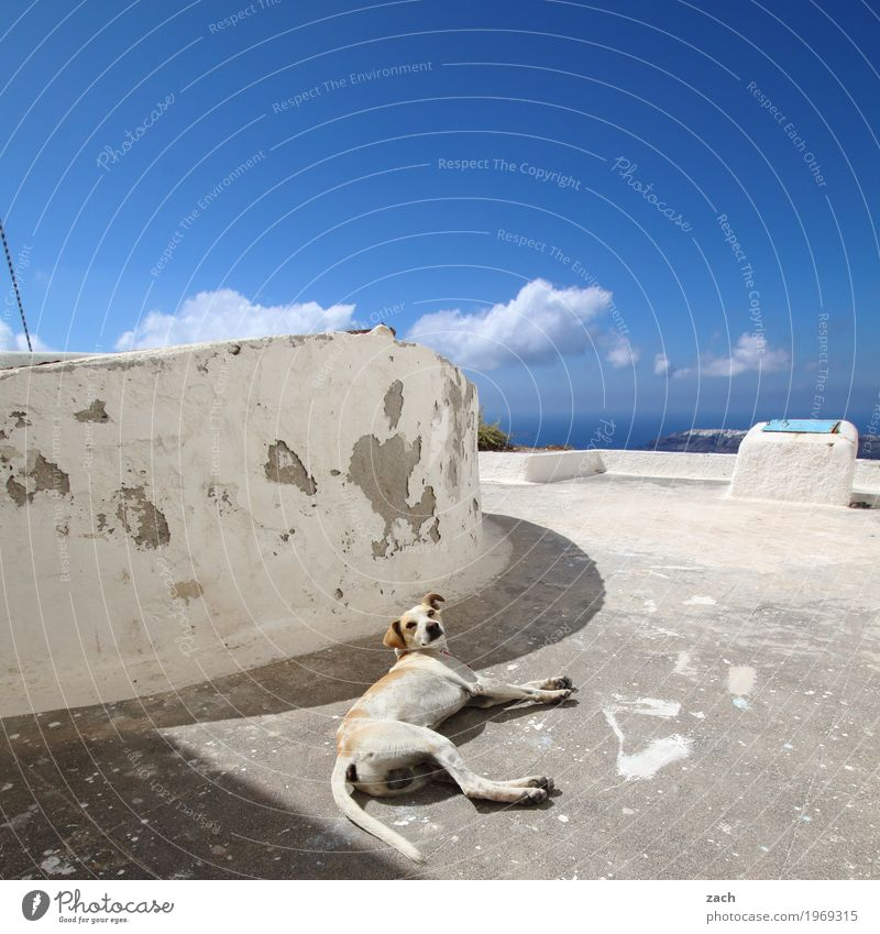 Sky Dog Summer White Ocean Clouds Animal House (Residential Structure) Wall (building) Coast Wall (barrier) Facade Waves Island Beautiful weather Broken