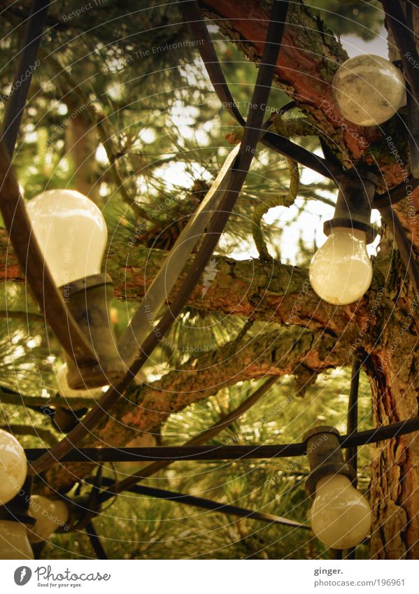 pear Garden Lamp Technology Energy industry Brown Gray Electric bulb Tree wired Cable Branch Green Coniferous trees Illuminate Many Homey Fairy lights Tree bark