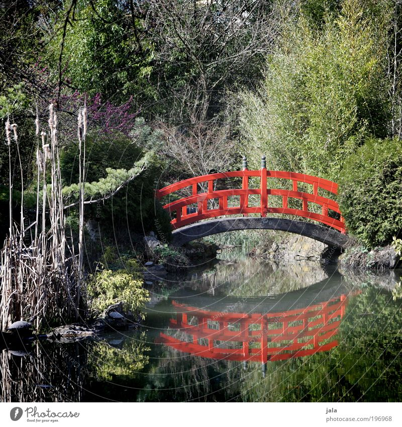Nature Water Tree Plant Red Garden Lake Park Bridge Esthetic Bushes Asia China Beautiful weather Pond