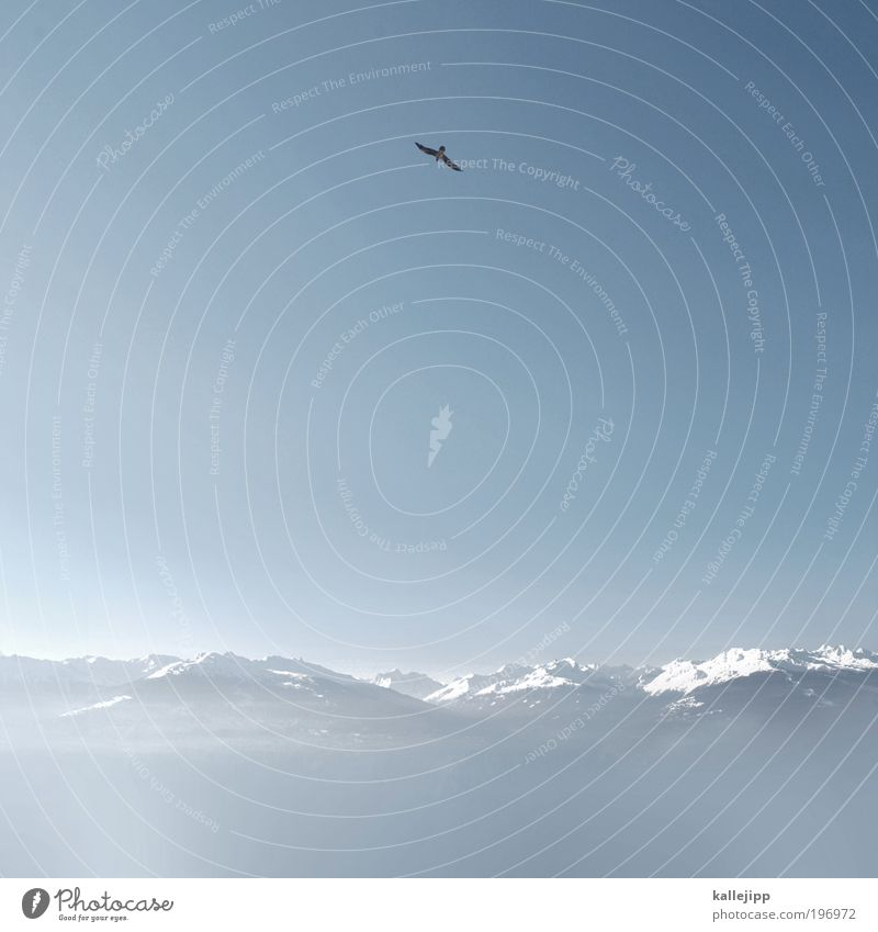 Sky Nature Winter Animal Snow Landscape Mountain Air Horizon Bird Flying Free Safety Might Alps Infinity