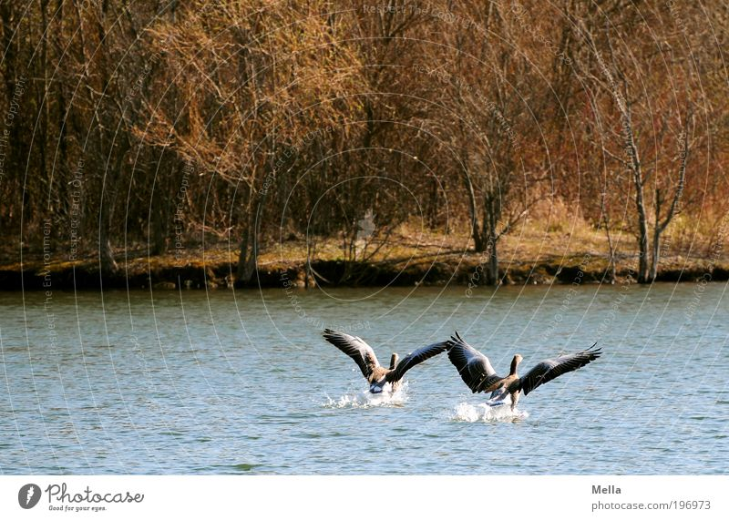 Nature Water Love Animal Freedom Lake Friendship Moody Together Bird Environment Flying Romance Swimming & Bathing Natural